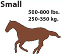 Small Horse 500 - 800 lbs.