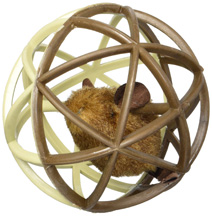 Trapped Mouse Ball of Fury Our Pets Co.