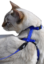 "CAT Figure ""H"" Adjustable Nylon Harness"