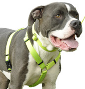 Standard Adjustable Nylon Dog Harness Nylon