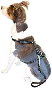 Travel Safety Harness MEDIUM