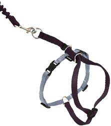 Come With Me Kitty Harness & Bungee Leash Black-Silver