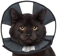Pro Cone Soft Recovery Collar Cat