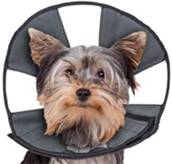 Pro Cone Soft Recovery Collar Dog